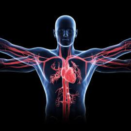 funções da água no corpo humano