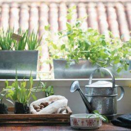 como fazer jardins em casa